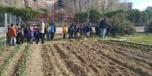 1º de Primaria_Plantamos garbanzo  8