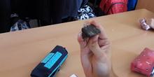Meteorito siderito