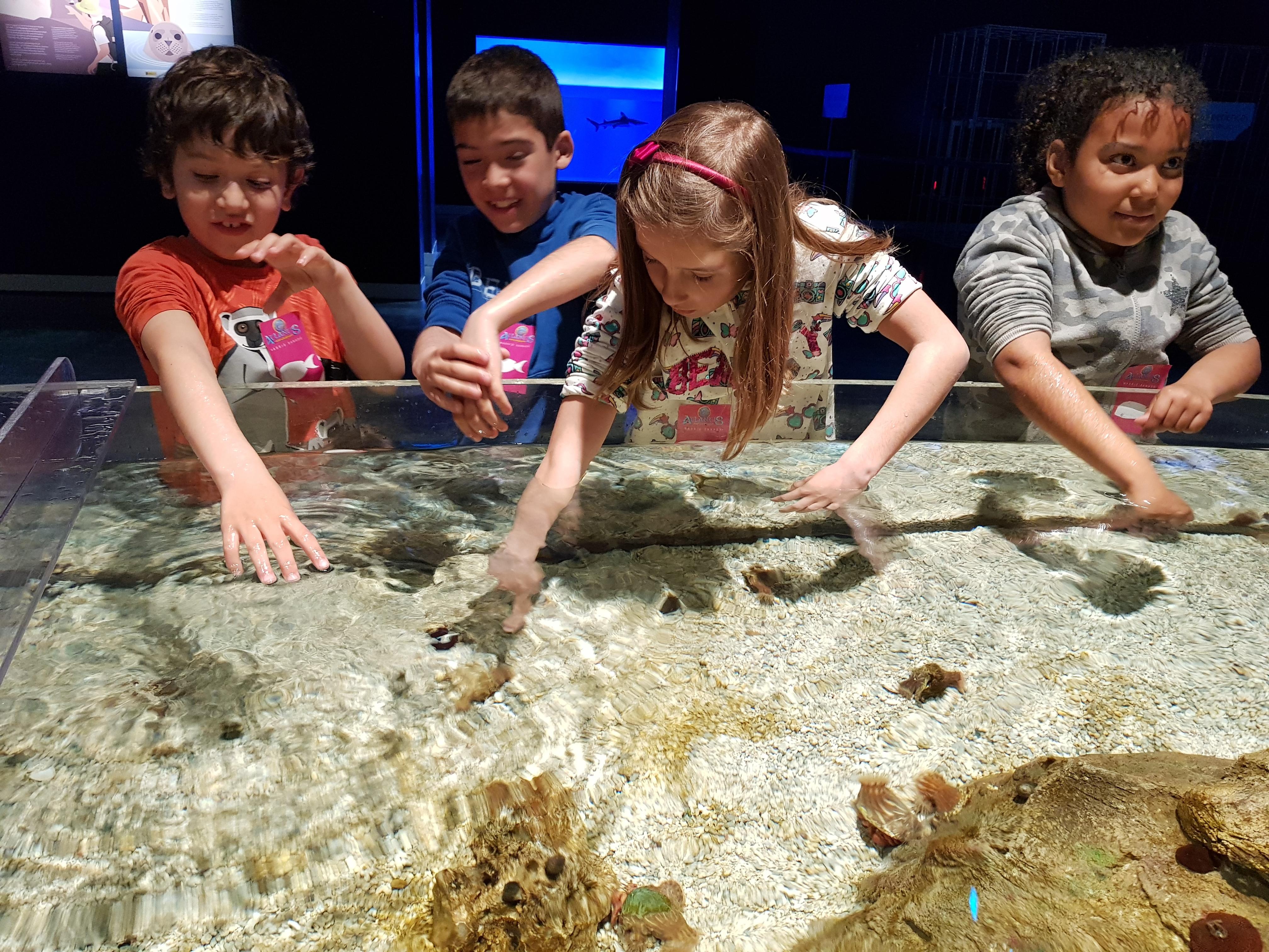 Fotos Aquarium Xanadú 3ºB 14