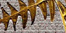 Detalle de las hojas sobre trama