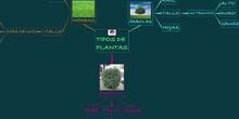 PRIMARIA - 1º - TIPOS DE PLANTAS SEGÚN SU TAMAÑO - CIENCIAS NATURALES