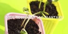 INFANTIL - 3 AÑOS - CUIDADOS DE LAS PLANTAS - FORMACIÓN