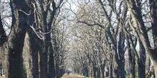 árboles en el paseo del Cementerio de Kerepesi, Budapest, Hungrí
