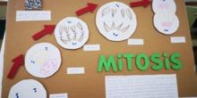 Mural de la mitosis