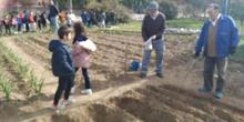 1º de Primaria_Plantamos garbanzo  12