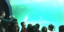 Excursión al zoo 5 años, 1º y 2º Luis Bello 31