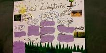 Terrestrial Ecosystem 5ºA (by Naia, Ximena and Lucía)