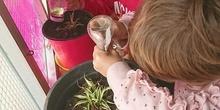 El huerto en febrero_fotos infantil_CEIP FDLR_Las Rozas