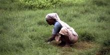 Trabajadora limpiando los jardines del Taj Mahal, Agra, India