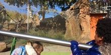 Excursión al zoo 5 años, 1º y 2º Luis Bello 27