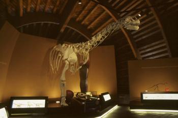 Anatomía del Camarasaurus (Dinosauria, Sauropoda), Museo del Jur