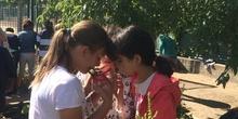 2019_06_11_4º observa insectos en el huerto_CEIP FDLR_Las Rozas 32