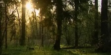 Poland/Bialowieza: primeval forest seeking for preservation