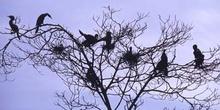 Aves en las orillas del río Dulce, Livingston, Guatemala