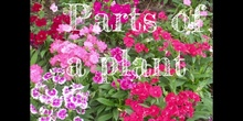 3º - PARTS OF A PLANT - NATURAL SCIENCE - PATRICIA R - FORMACIÓN