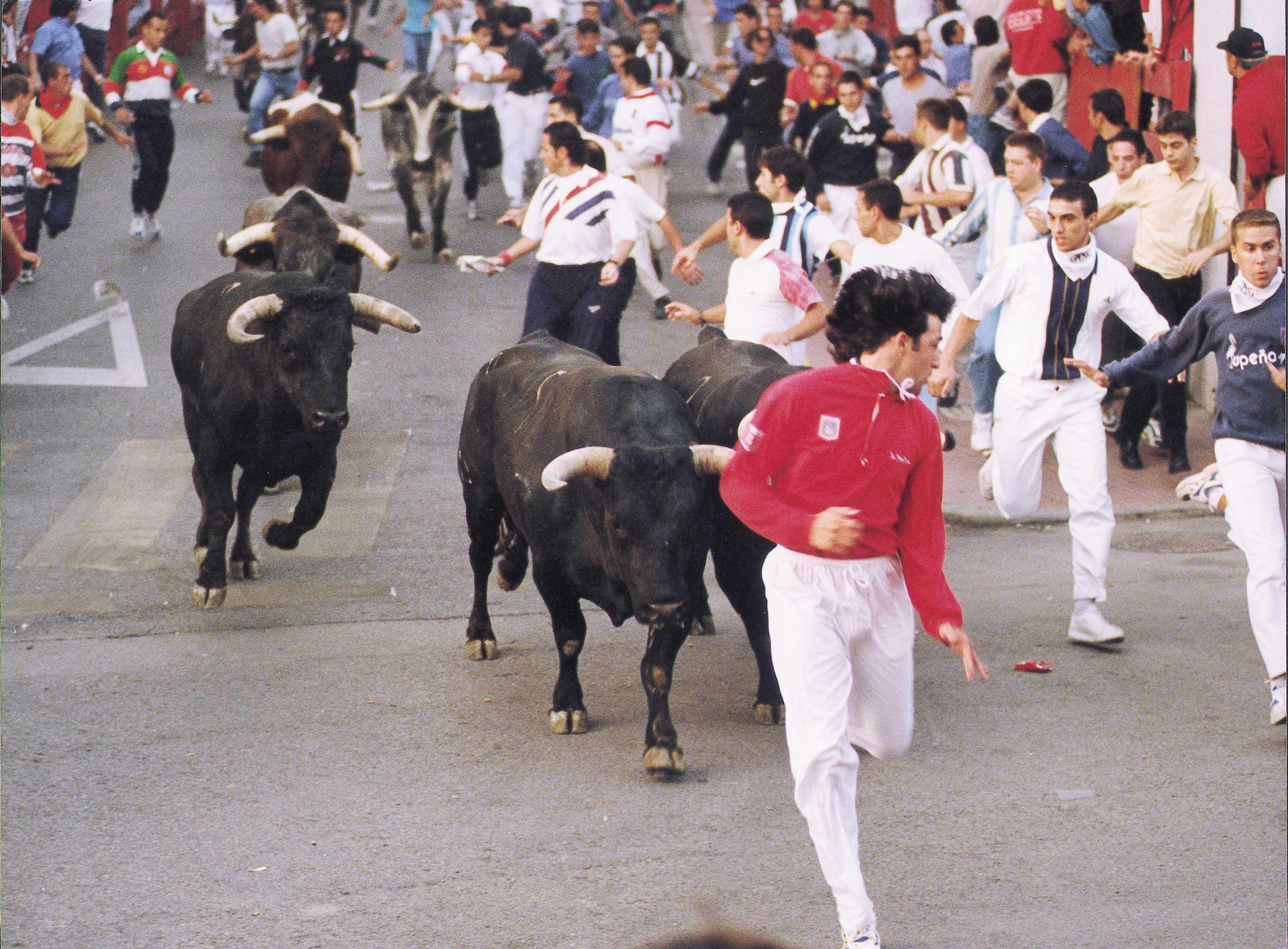 Detalle toros en encierro de San Sebastián de los Reyes