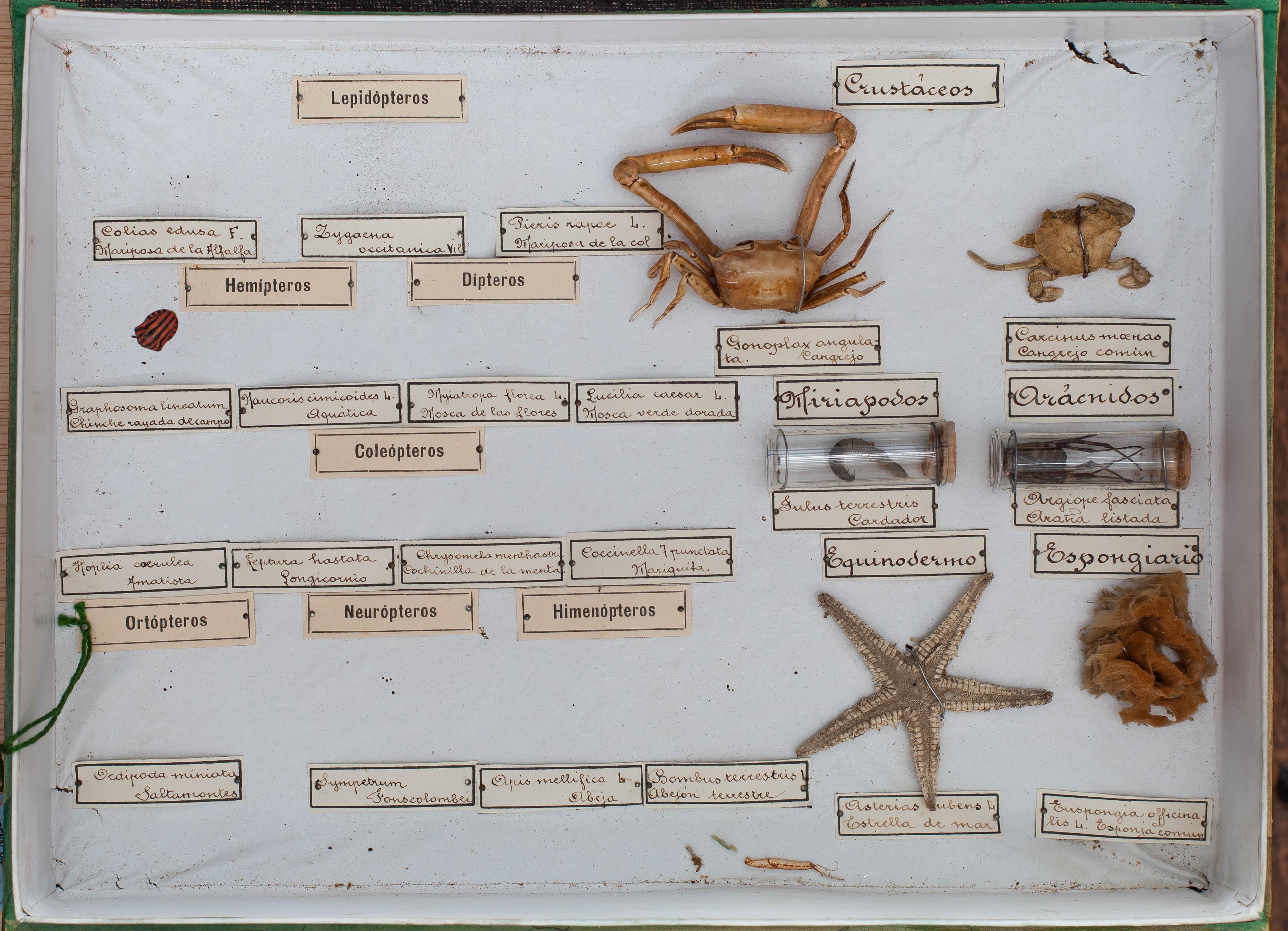 IES_CARDENALCISNEROS_Insectos_021