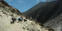 Caravana de yaks con cargamento