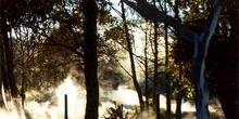 Actividad geotérmica en un parque de Rotorua, Nueva Zelanda