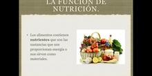 6º naturales la función de nutrición, los nutrientes