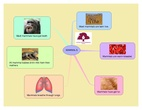 PRIMARIA - 1º - MAMMALS - NATURAL SCIENCE
