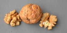Cáscara y fruto de la nuez