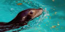 Animal marino, foca