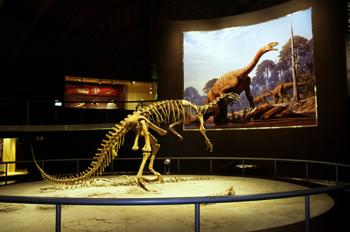 Plateosaurus (Dinosauria, Prosaurópodo), Museo del Jurásico de A