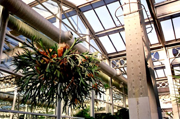 Planta suspendida en estructura metálica