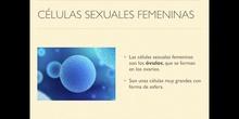 6º naturales función de reproducción, la fecundación