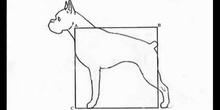 La naturaleza y la geometría (Perro 3 ESO)