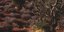 Vegetación de zona árida