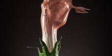 IES_SANISIDRO_MUSEO_Botanica_002