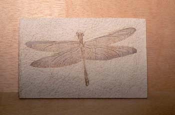 Stenophlebia aqualis (Insectos) Carbonífero
