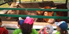 Infantil 3 años en la granja_CEIP Fernando de los Ríos_Las Rozas_2017-2018 19