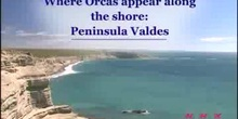 Where Orcas appear along the shore: the Valdes Peninsula: UNESCO Culture Sector