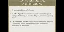 6º naturales la función de nutrición, el proceso digestivo