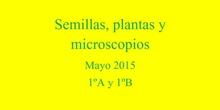 Semillas, plantas y microscopios