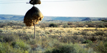 Nido gigante de pájaro en poste telegráfico, Namibia