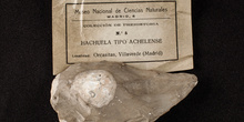 IES_SANISIDRO_MUSEO_Paleologia_001