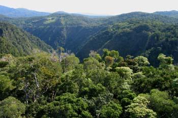 Selva cerca de Kuranda, Queensland, Australia