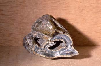 Rinoceronte - muela (Mamífero) Mioceno