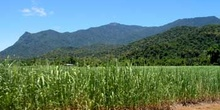 Plantación de caña de azúcar, Queensland, Australia