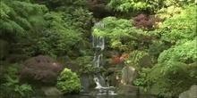 Jardines de Las acacias 4.2
