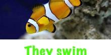 P2_NS Fish A