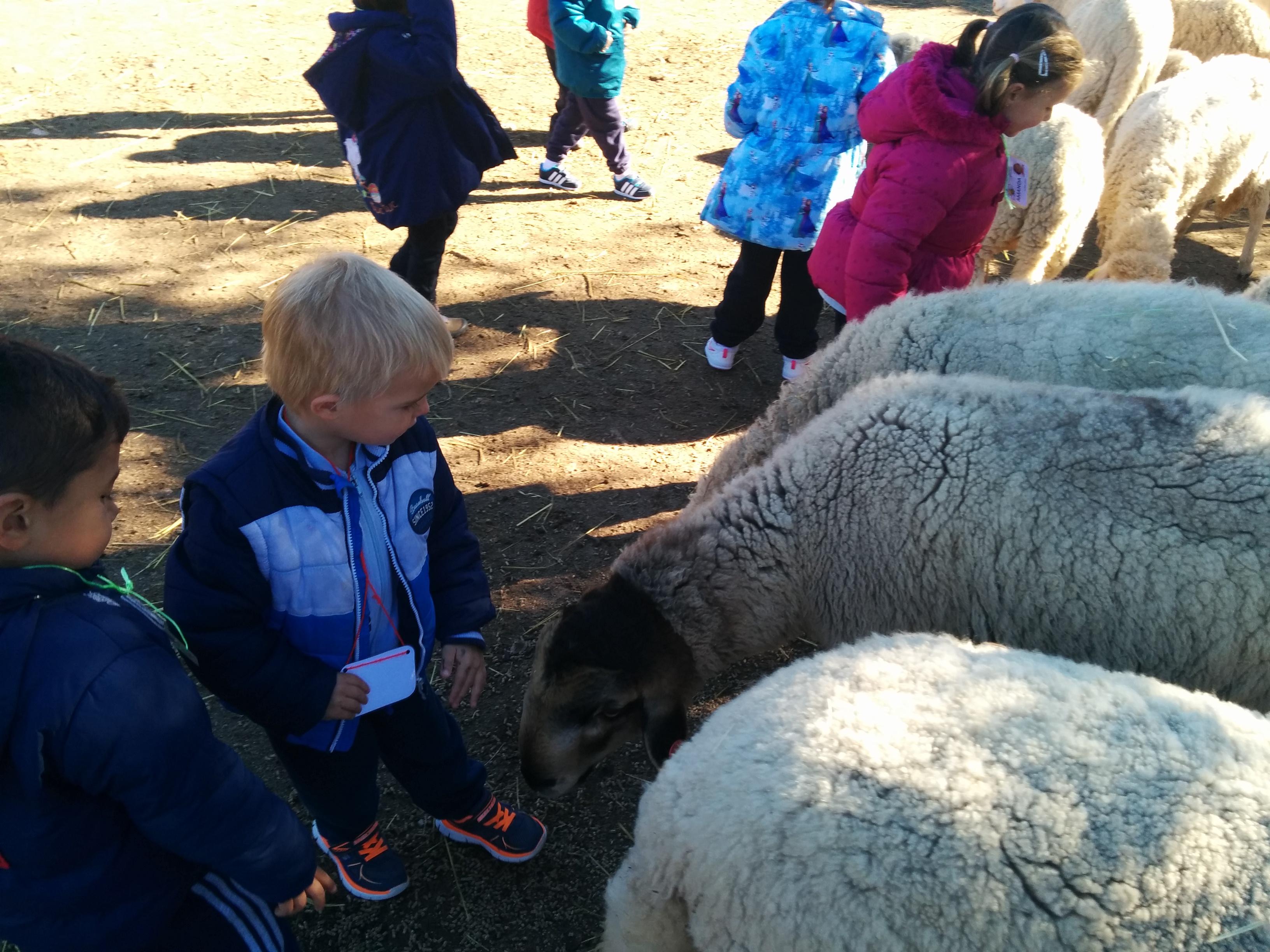2016_inf 4 años a visita la granja 26