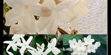 La naturaleza y la geometría (Flor polig 3 ESO)