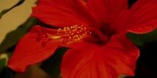 Flor muriendo