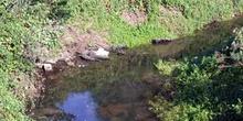 Curva de un río