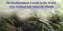 The Southernmost Forests in the World: New Zealand Sub-Antarctic Islands: UNESCO Culture Sector